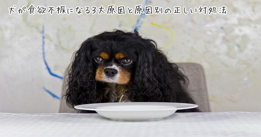 犬が食欲不振になる3大原因と原因別の正しい対処法